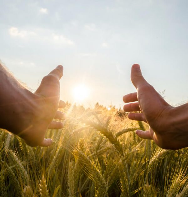 man-cupping-sun-with-his-hands-wheat (1)